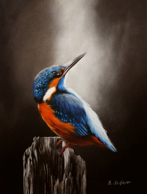Brita Seifert Kingfisher  Pastel/Colored pencil on paper