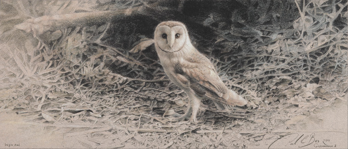 Paul Christiaan Bos Owlery I: Coppernickle  Fine Art Print, (oplage 100)